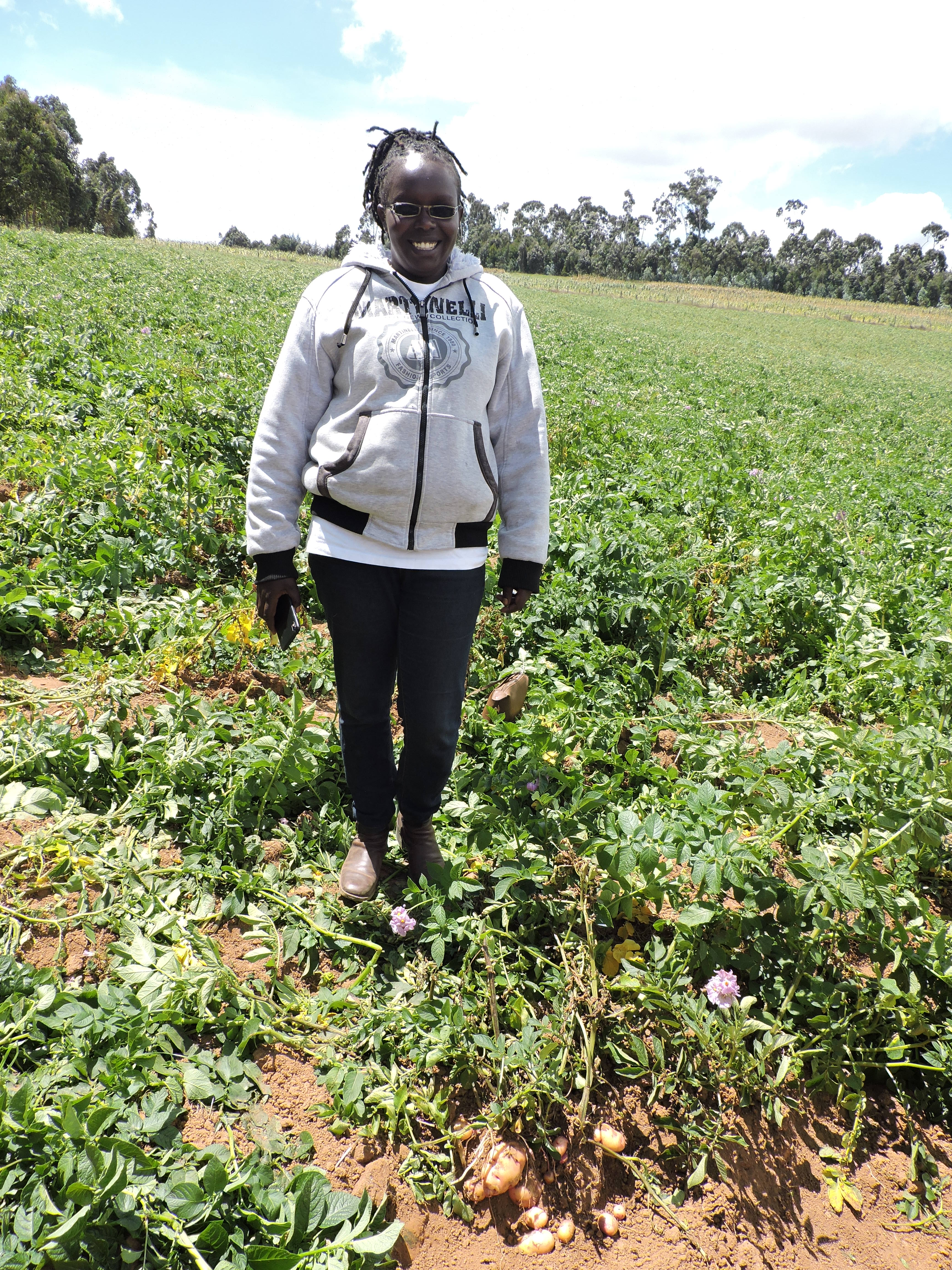 Farmers benefitting from Irish Aid support to potato farming in Nyandarua County, Kenya